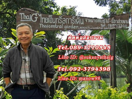 ThaiG สวนเกษตรพันธุ์ไม้